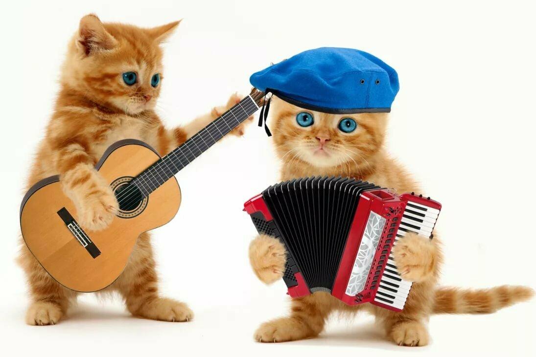 Картинка кошка с микрофоном