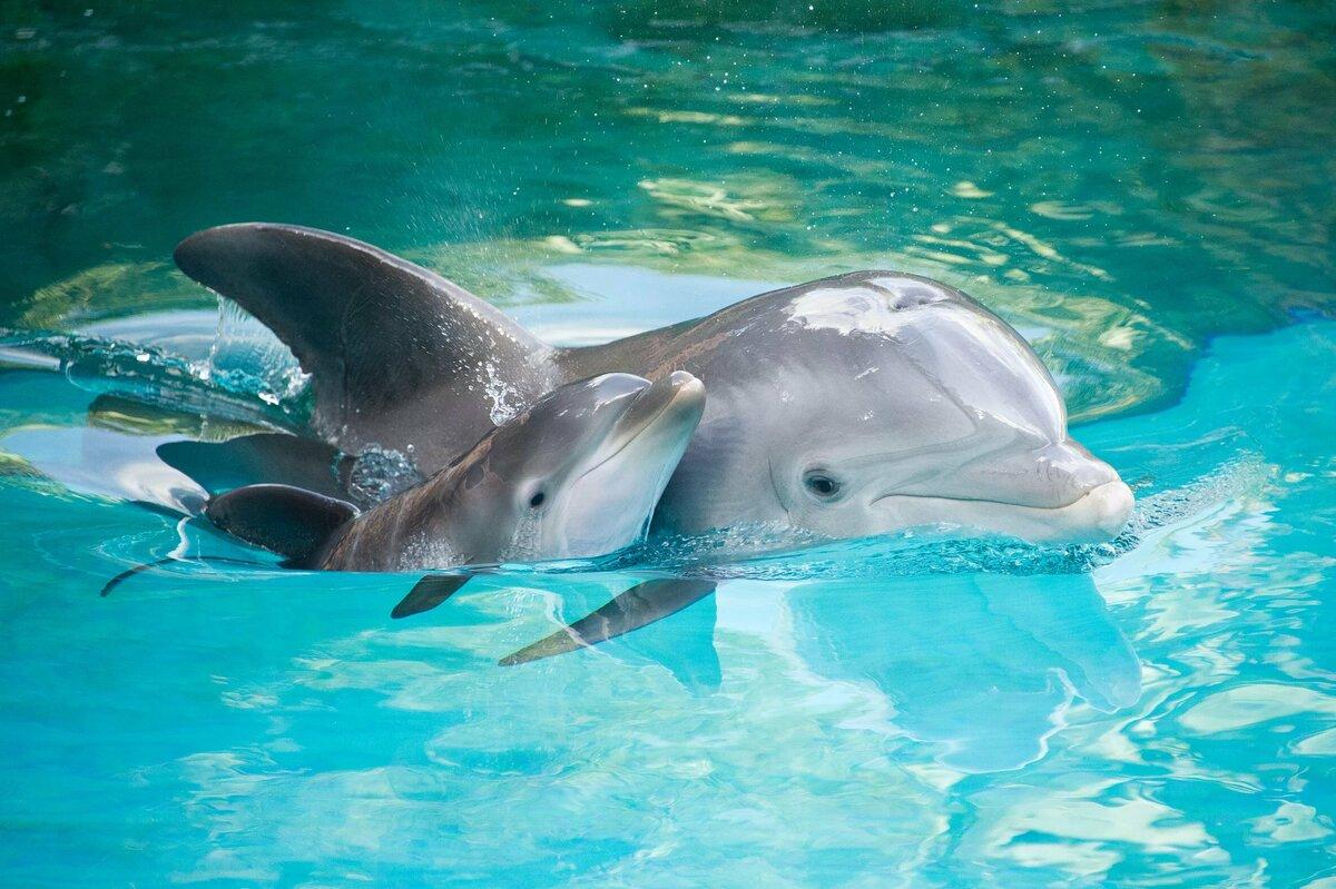 Маленькие дельфинчики картинки