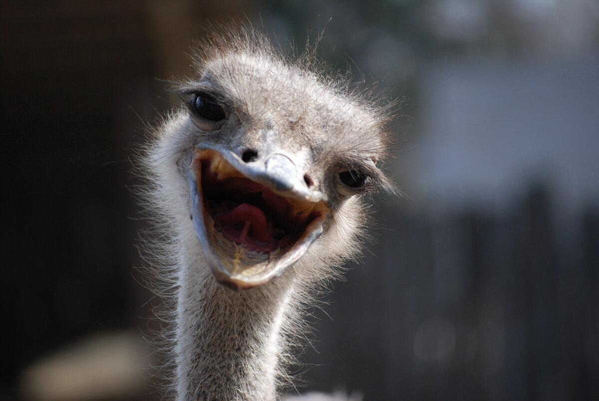 Приколы животные улыбаются фото