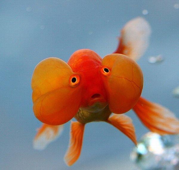 Картинки рыбки приколы, картинки пришельцами