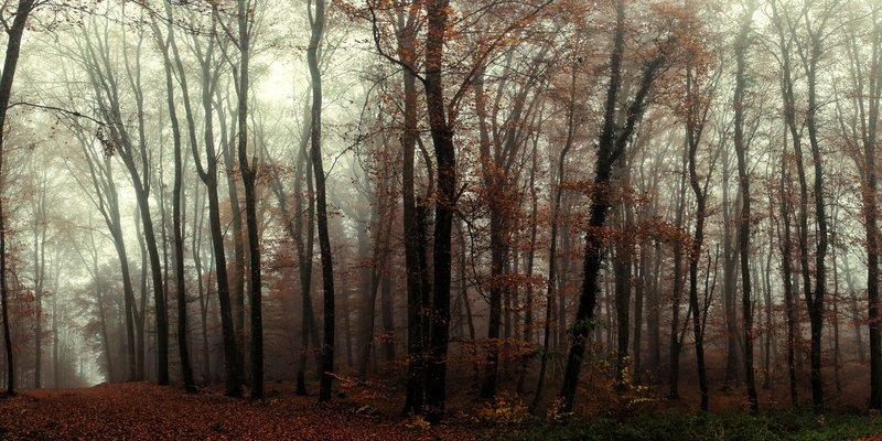 Темный лес осенней порой.