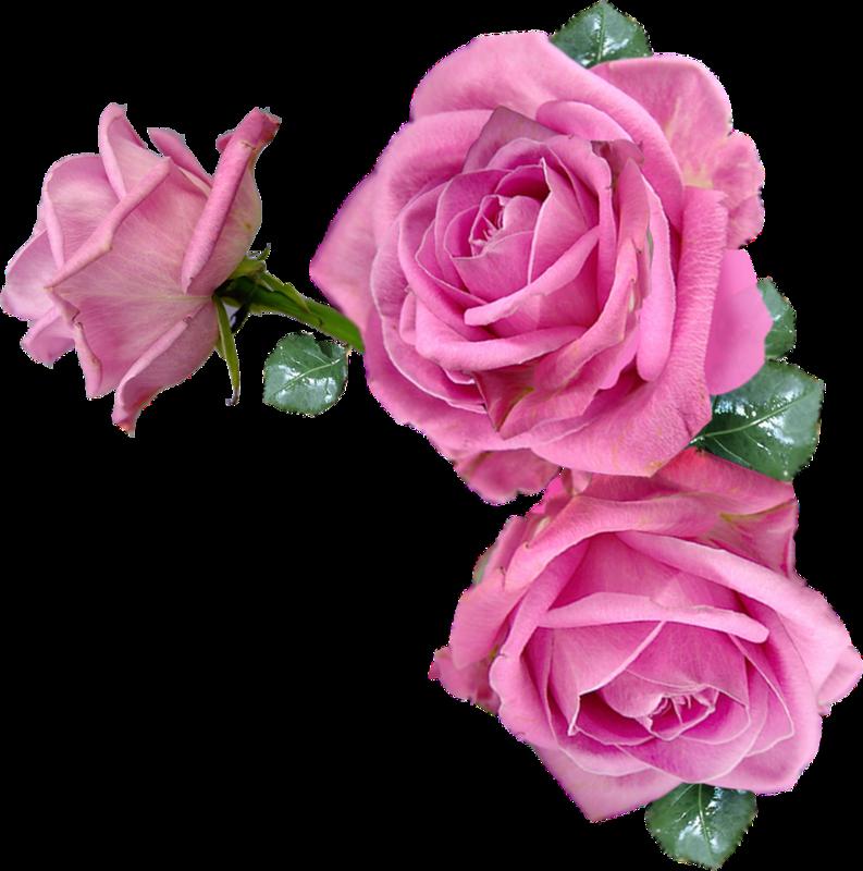 Анимашка цветы открытки