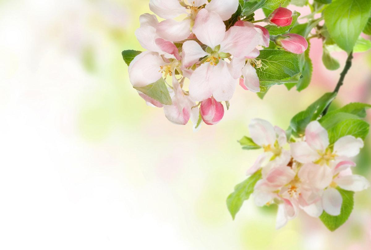 Открытки с яблоневым цветом, картинки про пауков
