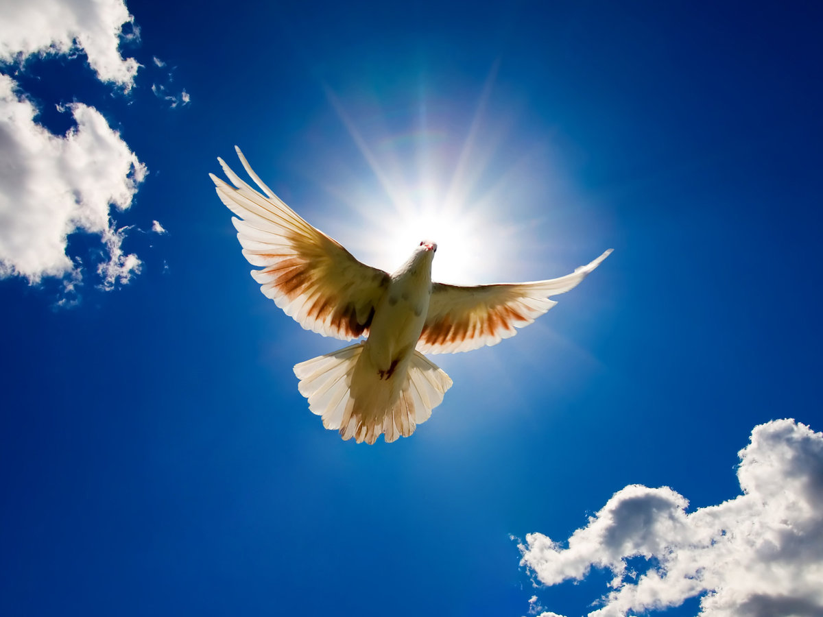Открытки птицы в небе, открытка мая ветерану