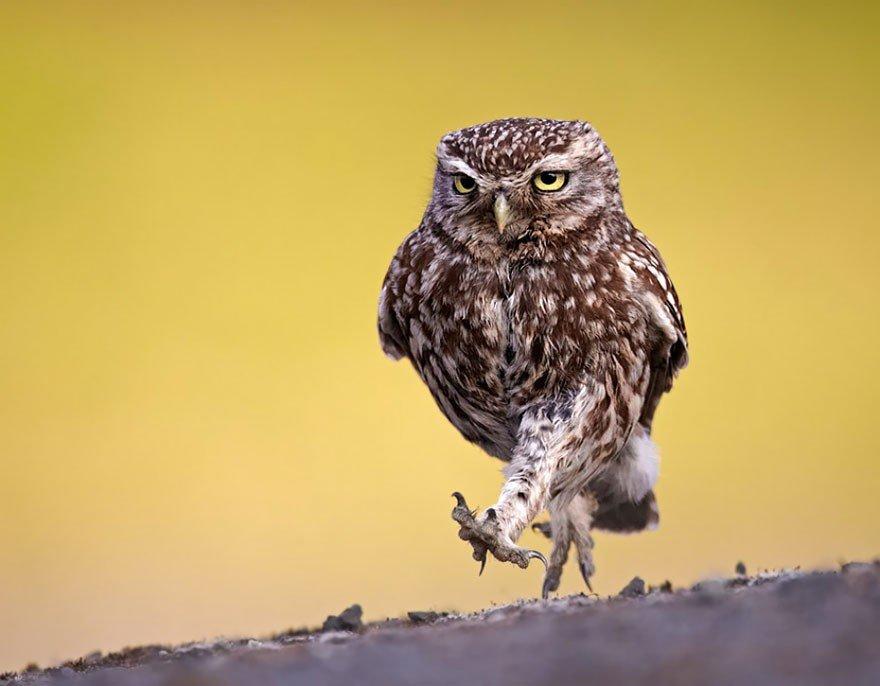 Открытка поздравление, картинки про сову смешные