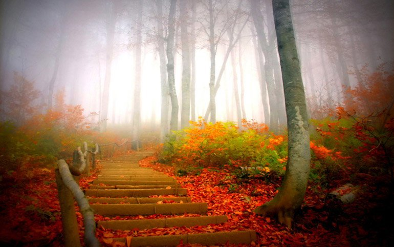 Лестница в туман