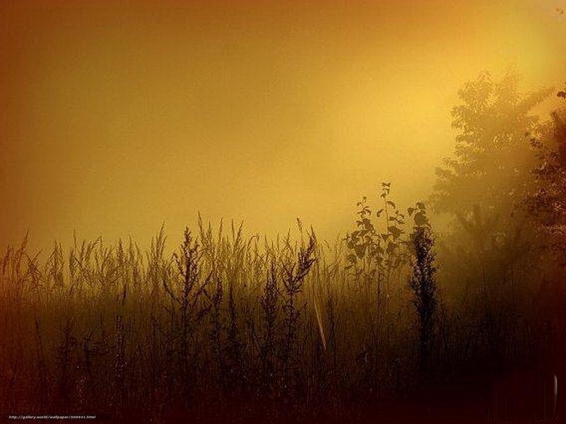 туман и свет