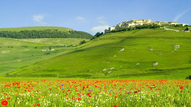 природа, холмы, маки, леса, поля, цветы