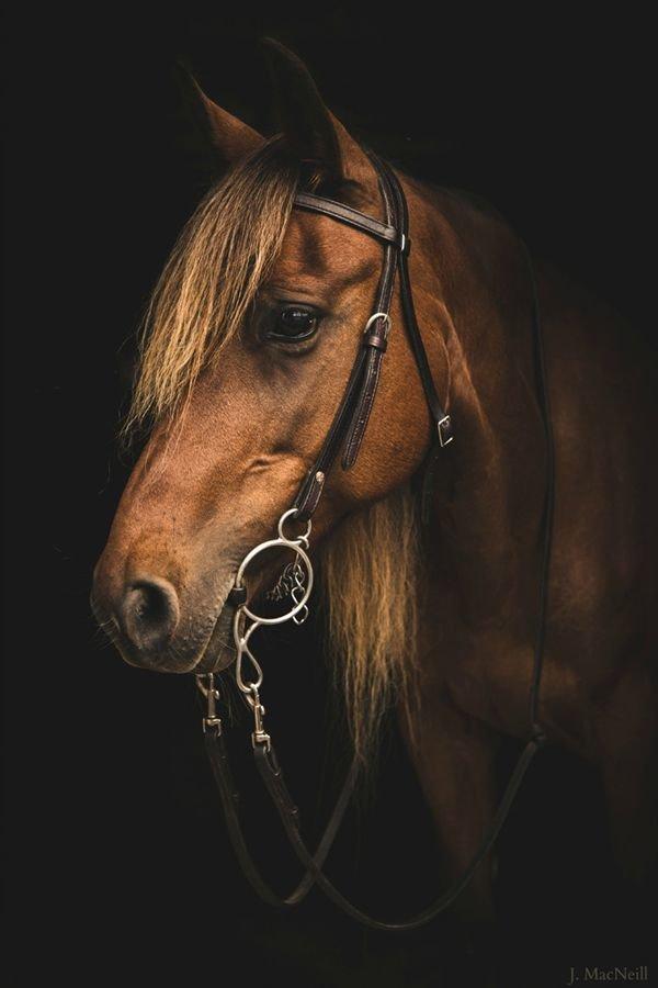 Потрясающий портрет лошадки.