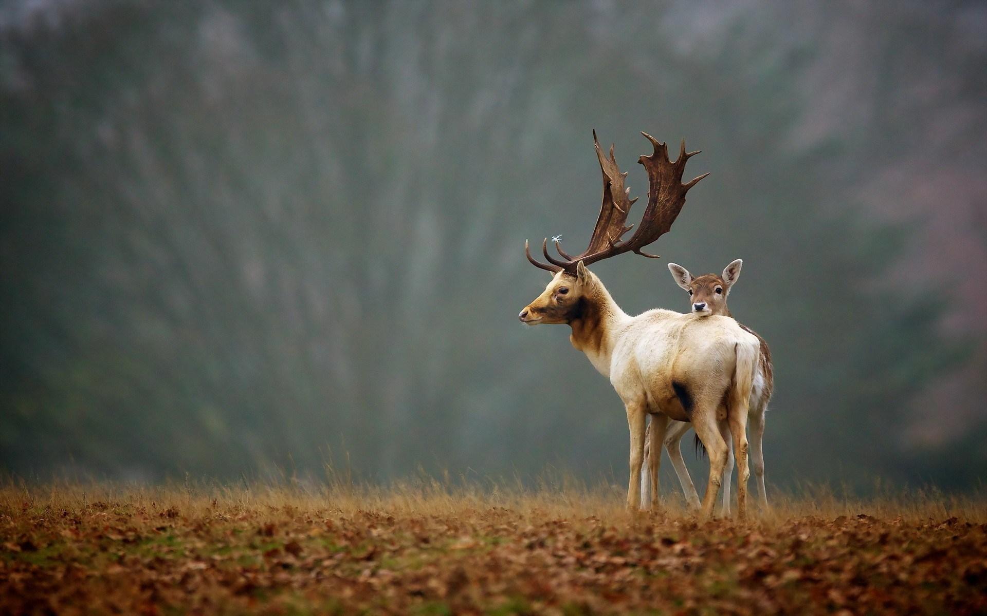 deer animals nature ANIMALS Deer Moose & Reindeer