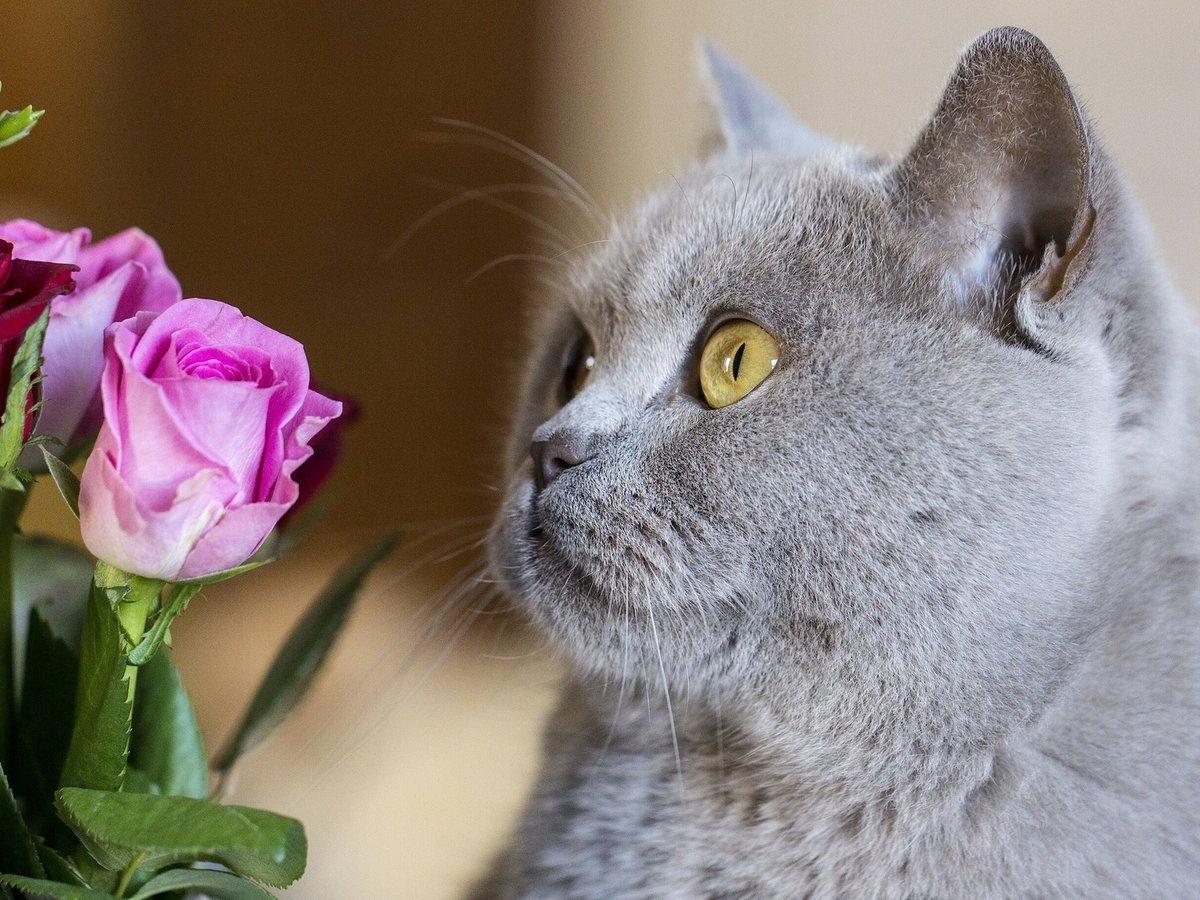 Картинка кошка в росе