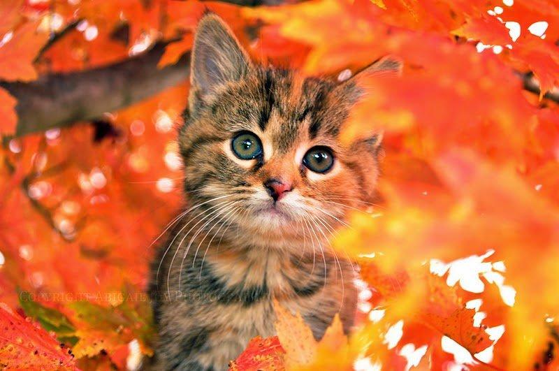 Открытки кота с осени, живые картинки