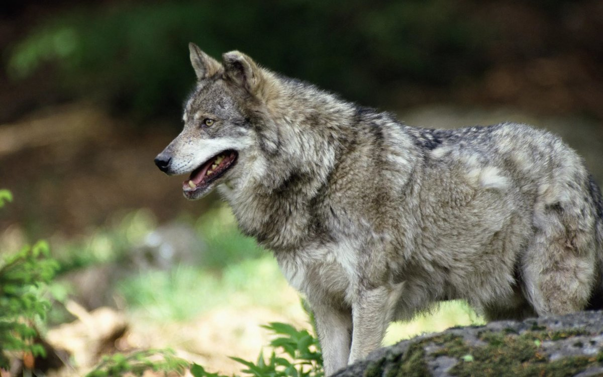 Картинки из волка, прикольные картинки открытки