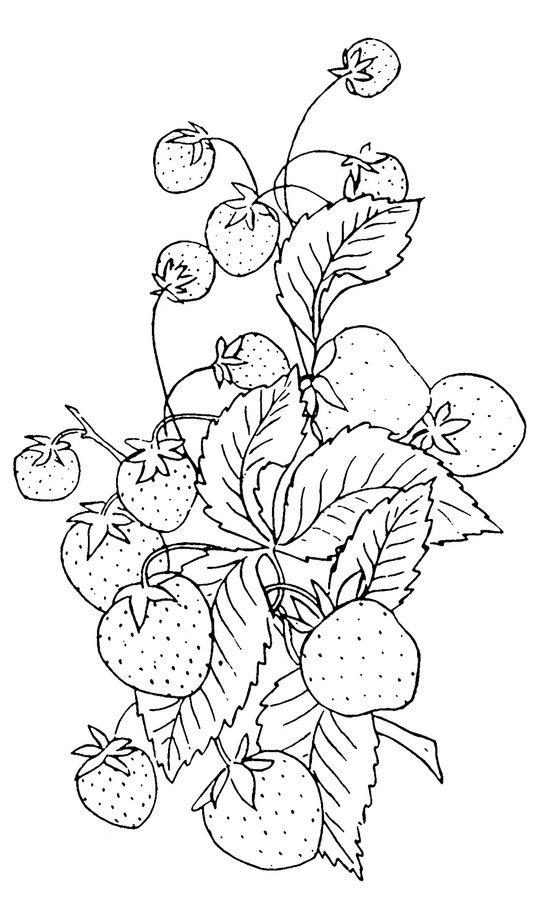 Картинки фрукты для выжигания по дереву подходят для