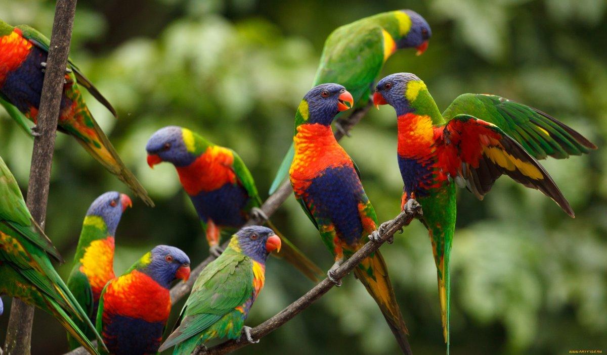 Попугаи птички картинки