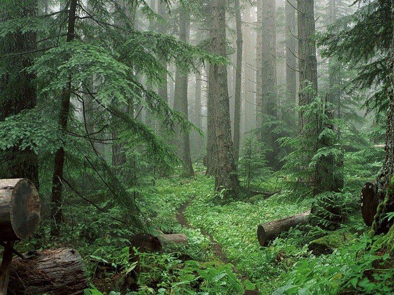 Наверное, у каждого кто побывал в лесу, остались о нем яркие впечатления и воспоминания.