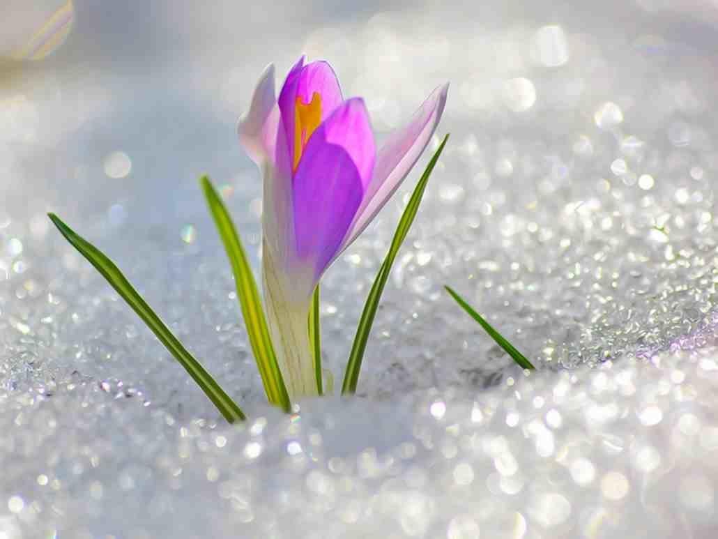 Весна на открытках, всемирный день