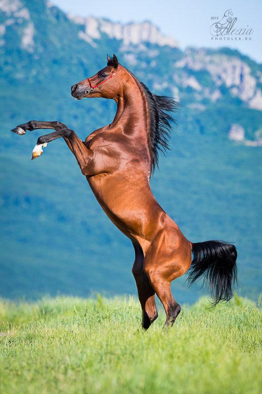 лошади в дыбах картинки книга