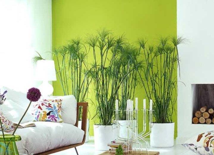 При тесном расположении цветов необходимо выбирать близкие по цвету листвы и бутонов растения. Не секрет, что растения отличаются своей цветовой гаммой.