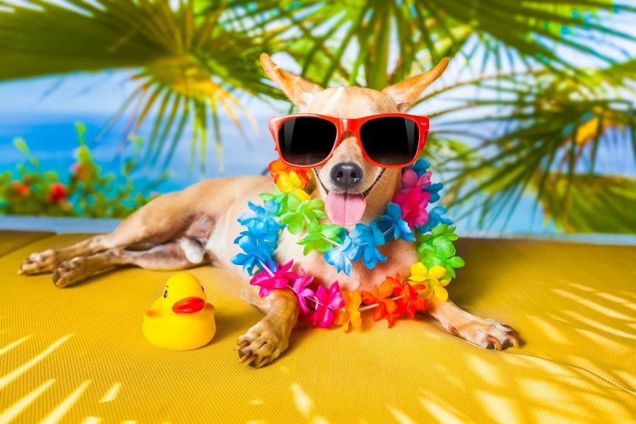 Надписью большая, смешные картинки про лето и отпуск