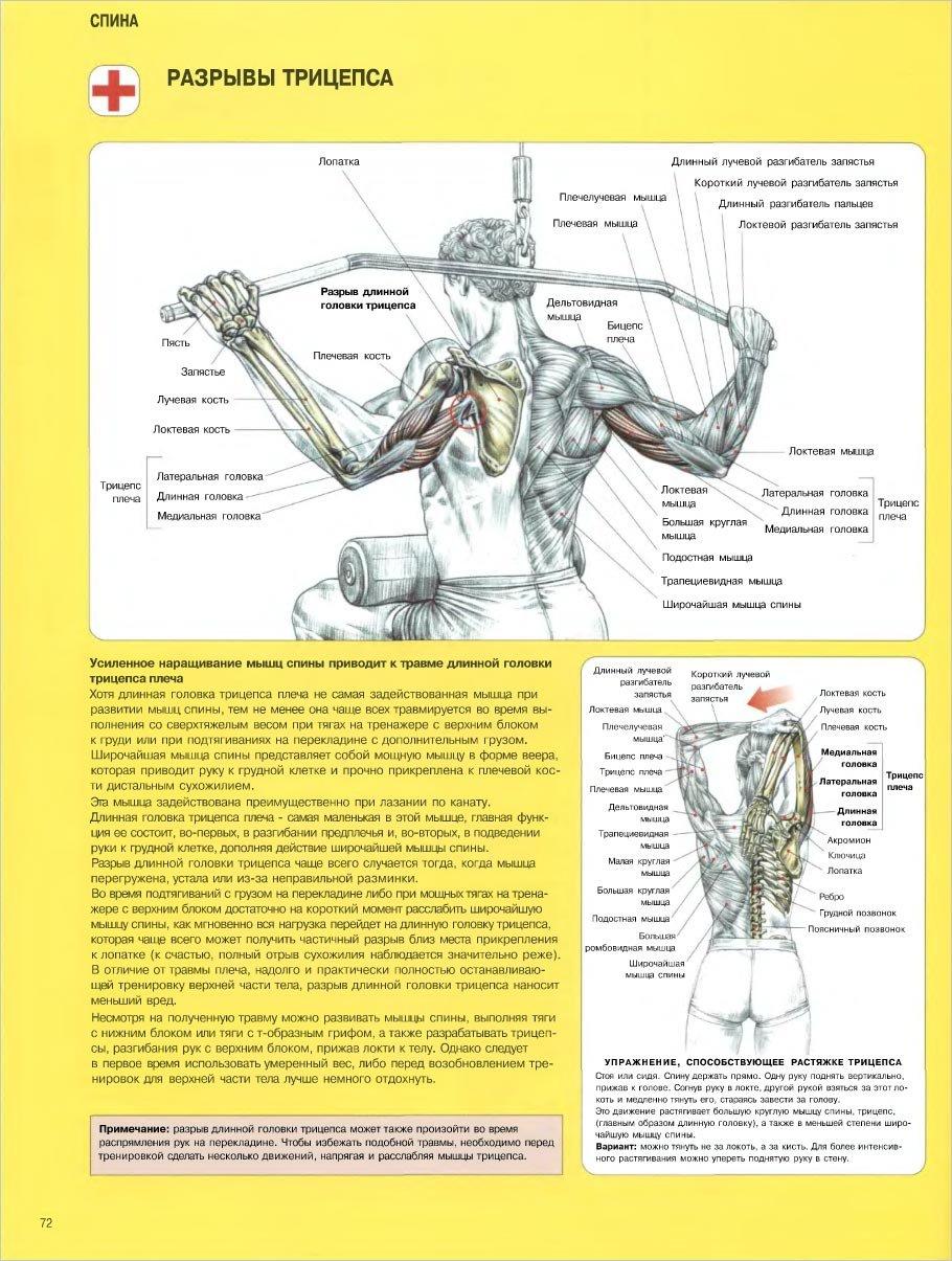 программа тренировок на массу мужчине худого телосложения