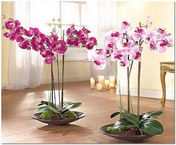Орхидеи в интерьере комнаты