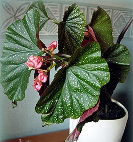 Декор цветочного горшка своими руками фото мастер