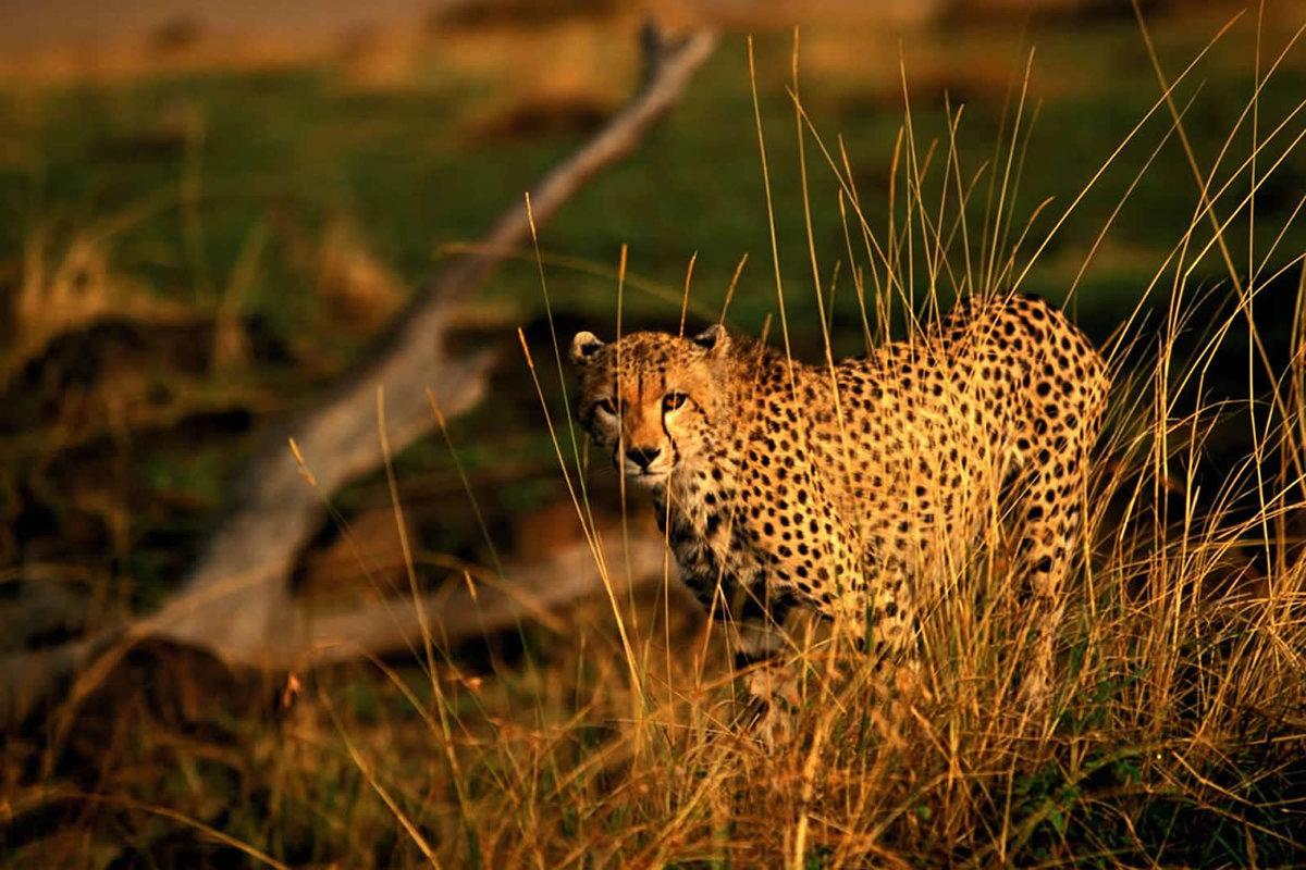 проявляется при смотреть картинки про диких животных лагерь