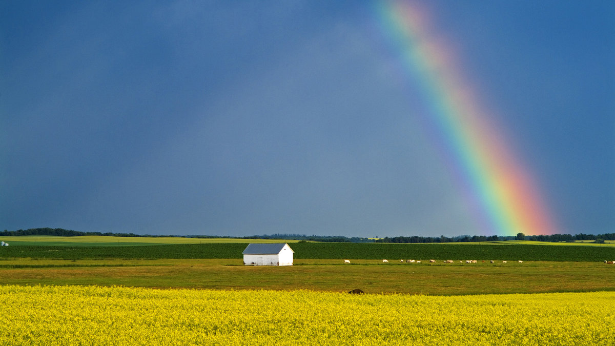 Открытка прощай, открытки с радугой в поле