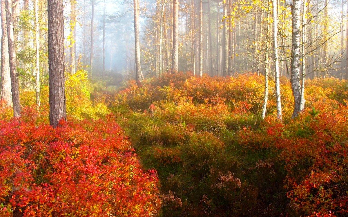 Природа в лесу осень картинки