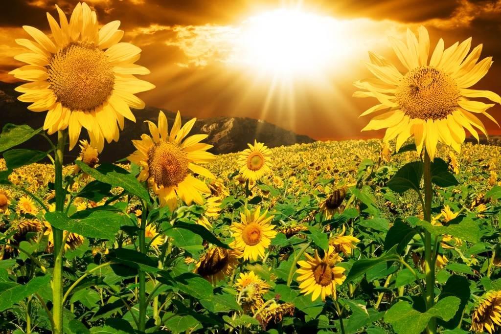 Открытка с видом солнца