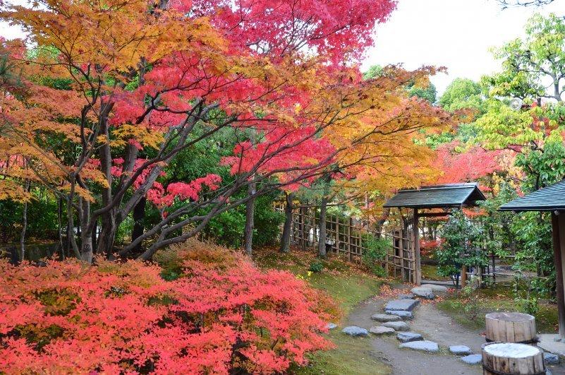 experience in autumn in shiga nagoyas at kinosaki