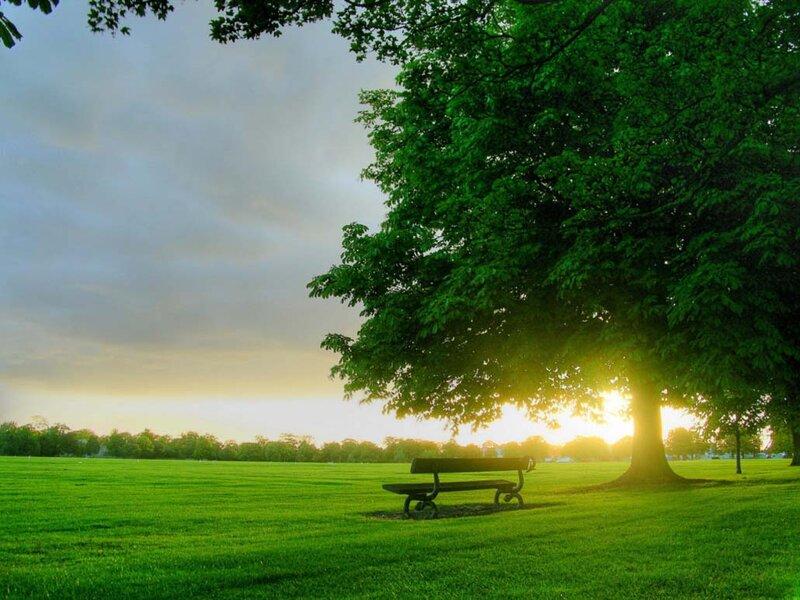 Рассвет в парке