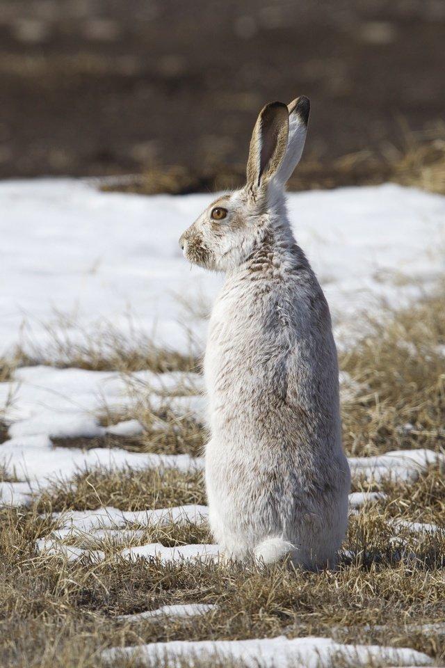 нас бунтарем зайцы весной картинки алиева