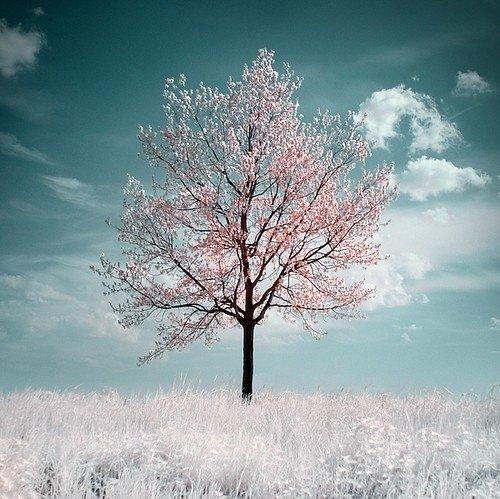 essays on winter dreams