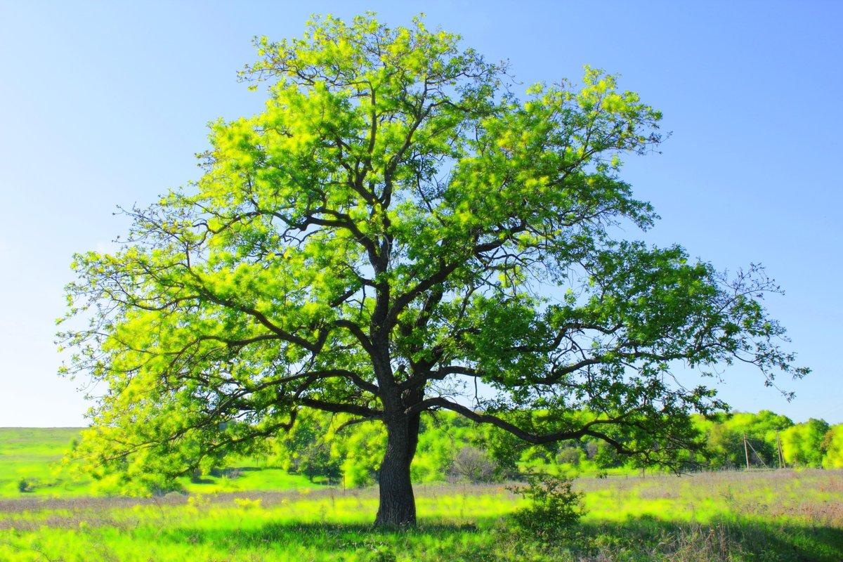 картинки зеленое дерево расскажет