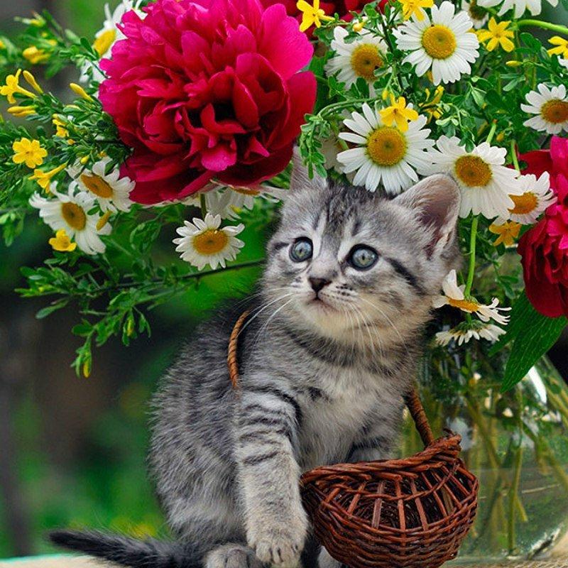 Открытки с котенком и цветами