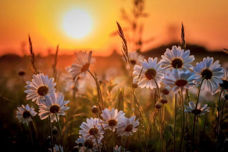 лето прекрасное ромашки