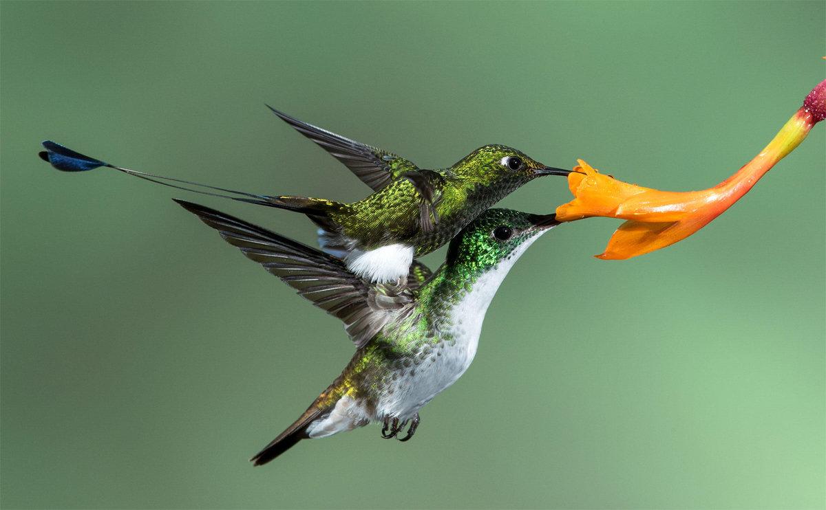 Экзотические птицы фото с названиями появлением