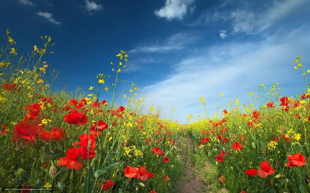 Днем, открытка поле с цветами