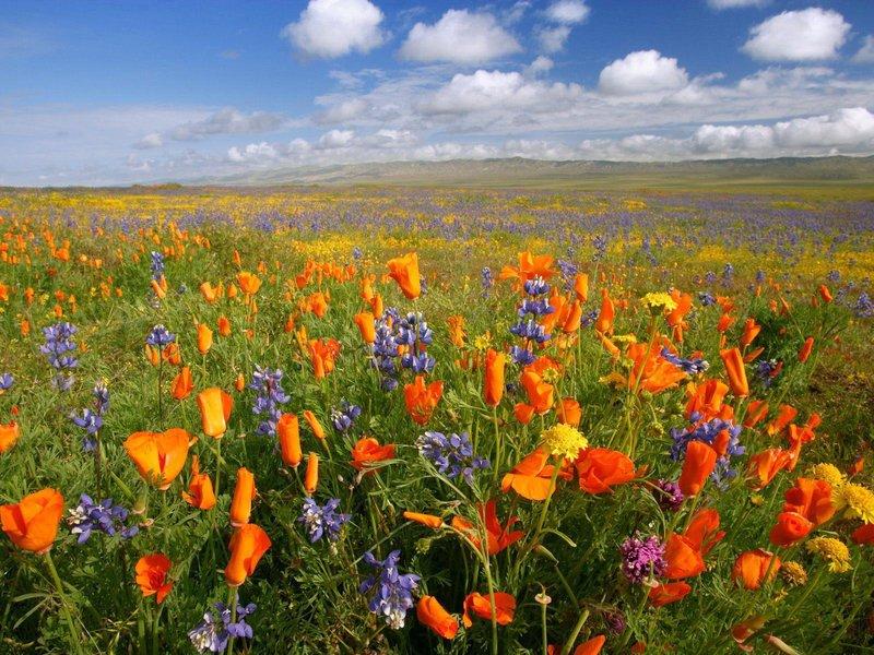 Поле красивых полевых цветов.