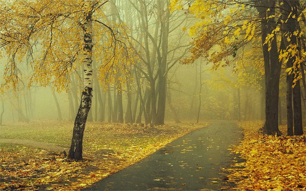 Осенний туман и асфальтная дорожка
