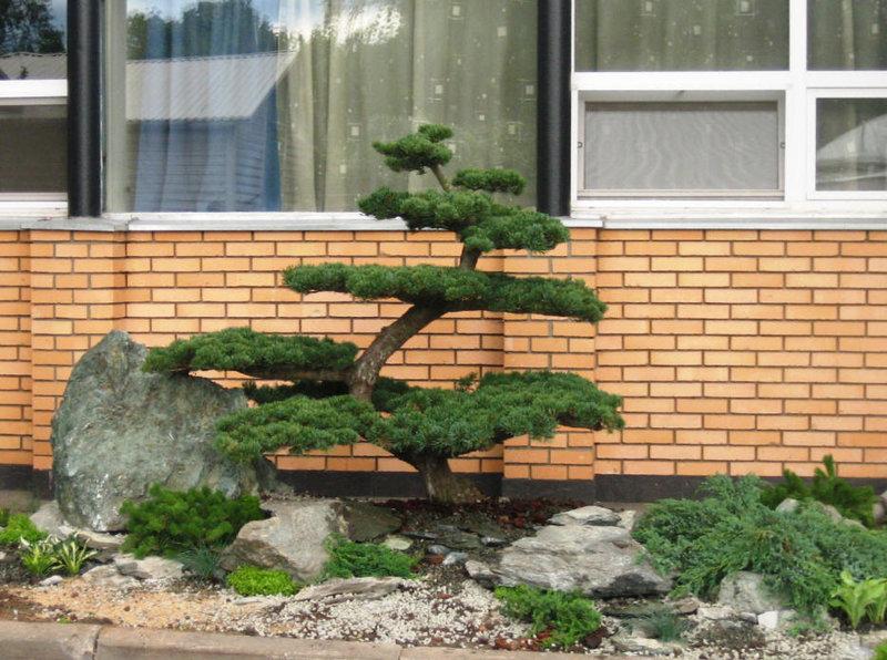 138Композиции растений в ландшафтном дизайне на