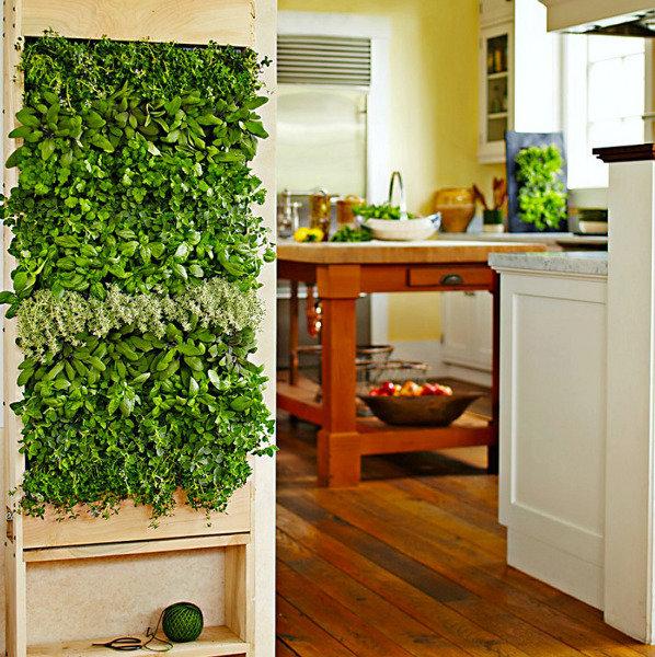 Комнатные растения в интерьере кухни