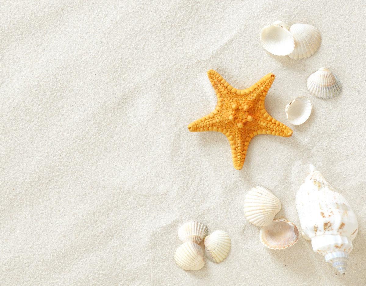 человека фон песок ракушки для детей очень