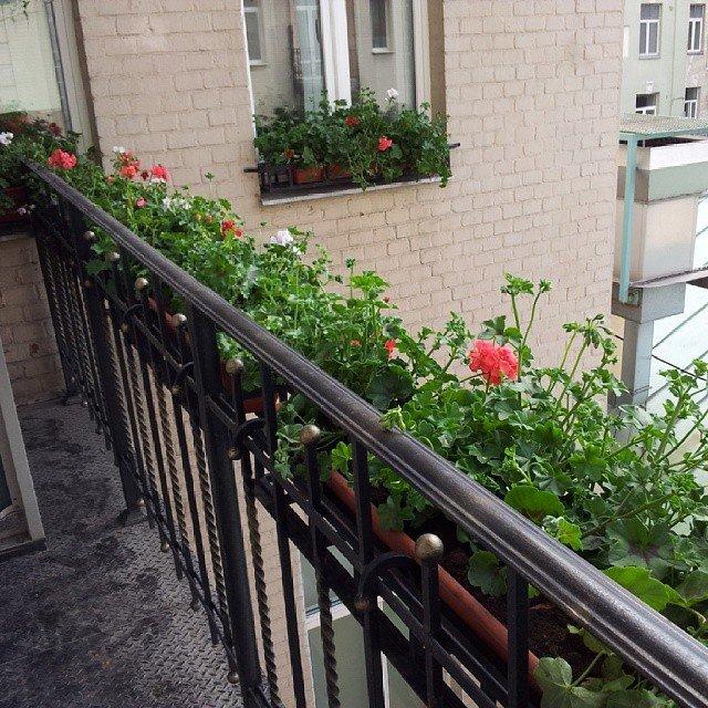 Если ваш балкон не остеклен, озеленение балкона, помимо деко.