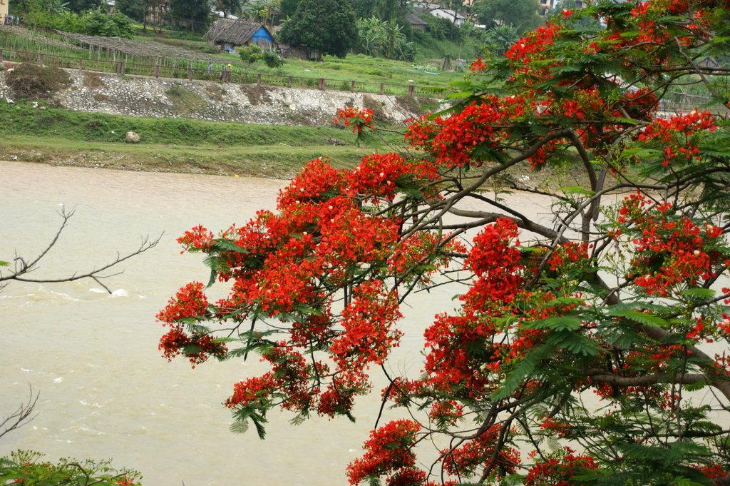бурно растительность вьетнама фото которого