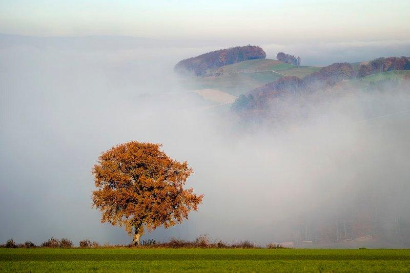 Осенний туман в Sarzens в западной Швейцарии. (Фото: AFP PHOTO/FABRICE COFFRINI)