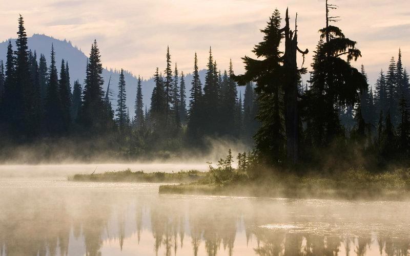 туман и тайга