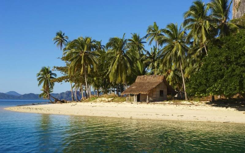 Пальмы на  Филиппинах